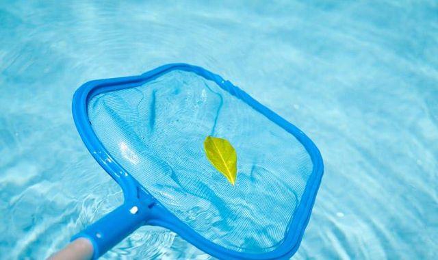 Prevención de algas en la piscina